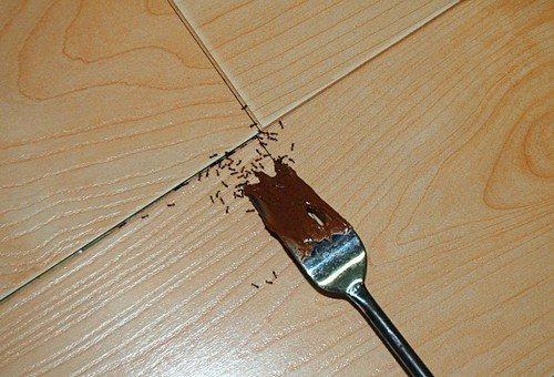 пищевые муравьи фото