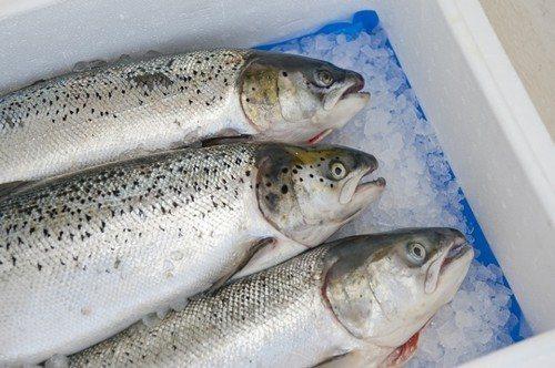 Сколько хранится малосольная рыба в холодильнике
