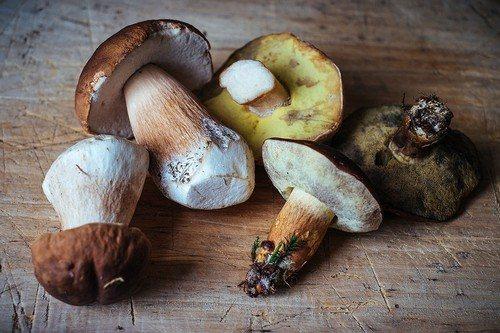 Как долго можно употреблять сушенные грибы после истечения срока хранения