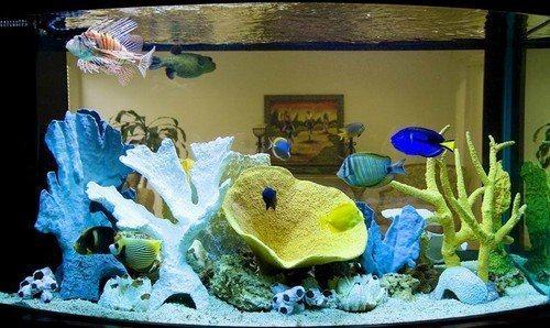 Как почистить аквариум от налета в домашних условиях