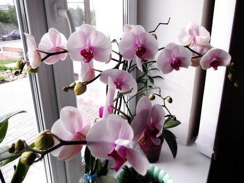 podkormki-dlya-cveteniya-orhidei-1.jpg