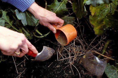 Top 10 najlepszych roślin, które są łatwe w uprawie