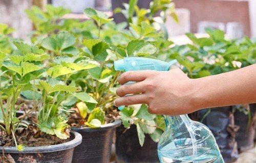 Янтарная кислота: инструкция, отзывы, для сада, огорода, цветов
