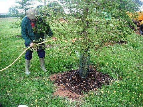 Осенний влагозарядный полив плодовых деревьев