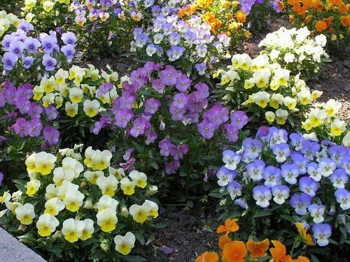 Вариации цветника