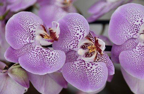Подкормка орхидеи
