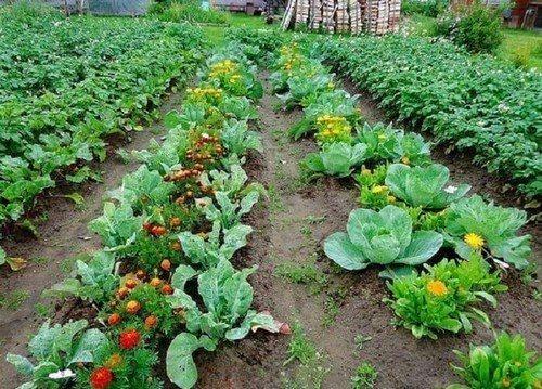 Растения-соседи