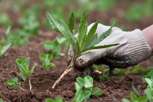 Средства против сорняков
