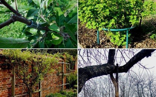 подпорки для плодовых деревьев